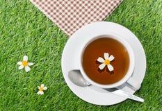 Сup чая стоцвета Стоковое Фото