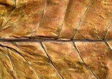 табак листьев Стоковое Изображение
