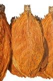 табак листьев Стоковые Фотографии RF