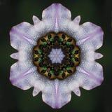 табак мандала цветка Стоковое Изображение RF