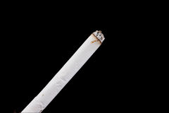 табак Стоковое фото RF