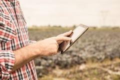 Таблетка в руках ` s фермера, поле капусты как предпосылка Стоковые Фотографии RF