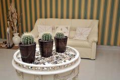 таблица кактуса potted Стоковая Фотография RF
