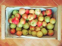таблица коробки яблок зеленая деревянная Стоковые Изображения RF