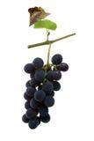 таблица красного цвета виноградин Стоковое Фото