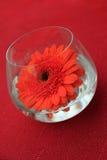 таблица красного цвета цветка украшения Стоковая Фотография