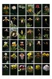 таблица орхидеи Стоковое Изображение RF