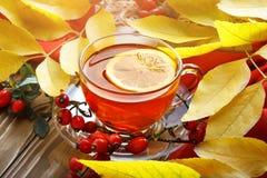 Таблица, украшенная с листьями осени, ягодами и свежим чаем Осень крупный план предпосылки осени красит красный цвет листьев плющ Стоковые Фото