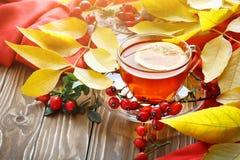 Таблица, украшенная с листьями осени, ягодами и свежим чаем Осень крупный план предпосылки осени красит красный цвет листьев плющ Стоковое Изображение RF