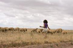 табунить овец Стоковое Изображение