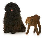 табунить собаки Стоковые Изображения RF