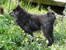 Табунить собаку в тундре в летнем дне Стоковая Фотография