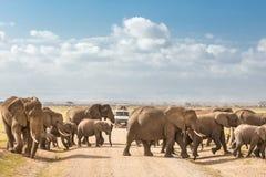 Табун больших одичалых слонов пересекая roadi грязи в национальном парке Amboseli, Кении Стоковые Фотографии RF