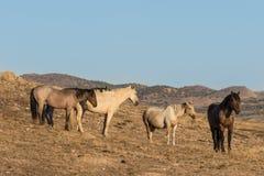 Табун дикой лошади в пустыне Стоковые Изображения