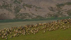 Табун животных ища свежую траву, саванну, Африку стоковое фото rf