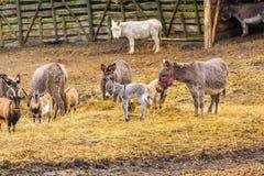 Табун животных стоя на выгоне Стоковое Изображение RF