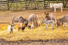 Табун животных стоя на выгоне Стоковые Фотографии RF