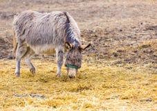 Табун животных стоя на выгоне Стоковое Фото