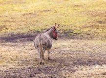 Табун животных стоя на выгоне Стоковое фото RF