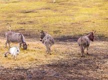 Табун животных стоя на выгоне Стоковая Фотография RF