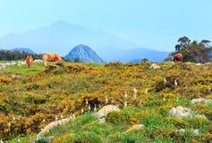 Табун коровы на холме лета Стоковое Фото