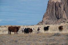 Табун коров пася на выгоне зимы в травянистых равнинах Стоковое фото RF