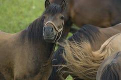 Табун лошади Стоковое фото RF