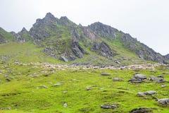 Табун овец и горы Стоковые Изображения