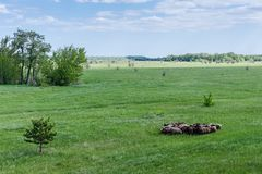 Табун овец на поле стоковое фото rf