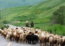 Табун овец Стоковые Изображения