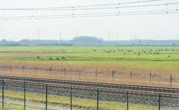 Табун оленей в природном парке вдоль железной дороги Стоковые Изображения RF