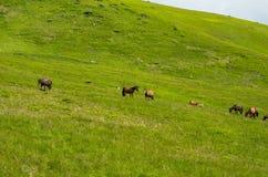 Табун лошадей Стоковое фото RF