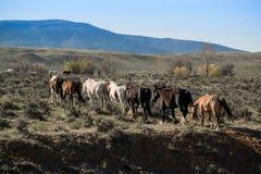 Табун лошадей Стоковая Фотография RF