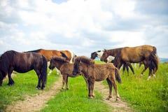 Табун лошадей Стоковые Изображения RF