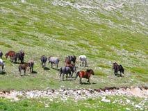 Табун лошадей, Стоковые Изображения