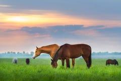 Табун лошади пася Стоковое Изображение