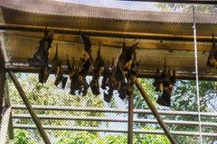 Табун сна остатков летучих мышей в клетке стоковые фотографии rf