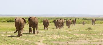 Табун слона в Кении Стоковая Фотография RF
