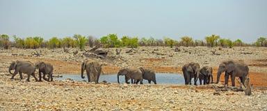 Табун слонов идя далеко от waterhole Стоковое Изображение
