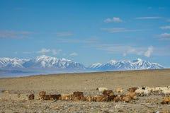 Табун травоядных животных в прерии Стоковые Фотографии RF