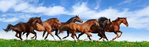 табун gallops Стоковое Изображение