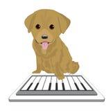Таблетка касающего экрана щенка Лабрадора играя с роялем app Стоковая Фотография