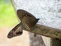Таблица древесины муфты бабочки Стоковые Фотографии RF
