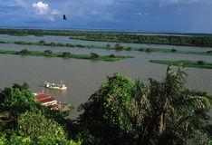 тазик Бразилия Амазонкы Стоковые Фото