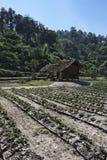 Таиланд, Mai Chiang, село Карен Стоковое Фото