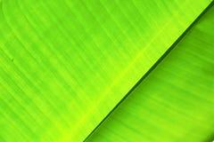 Таиланд в светлых абстрактных лист и его венах Стоковая Фотография