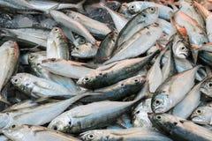 Таиланд много рыб в рынке Стоковое Фото