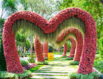 Таиланд - 15-ое марта 2016: Розовый путь сердец в саде n зоопарка тигра Стоковая Фотография RF