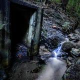 Тайна в древесинах Стоковые Фотографии RF