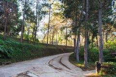 Тайна дорожки в тропическом тропическом лесе Стоковое Изображение